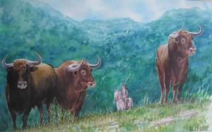 toros-en-el-campo-acuarela-Fermin-Hache